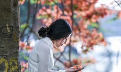 Tho: Canh phuong dau tien - mua ha cuoi cung hinh anh 1 hoa_phuong_do.jpg